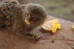 More marmoset to make you feel better