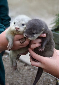 http://www.tumblr.com/tagged/sea%20otters?before=18