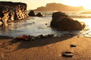 Greyhound Beach 01