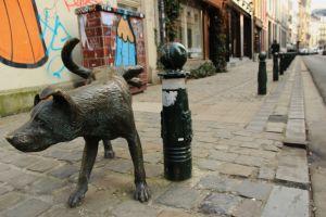 Brussels dog