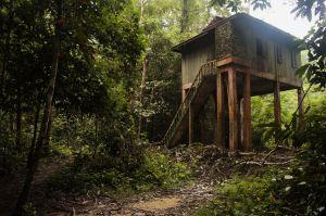 Taman Negara 03 Kumbang Hide