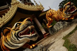 Tiger Temple 01