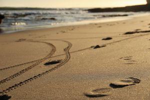 CA Santa Cruz beach 2