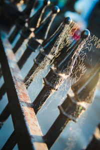 cobweb fence