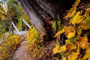 Tahoe walk 2