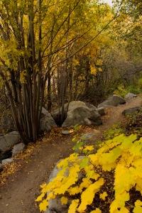 Tahoe walk 3