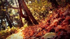 Fall leaves in Big Basin, California