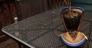 Portland broken pots