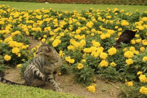 cats in Miraflores, traveling and backpacking in Lima, Peru