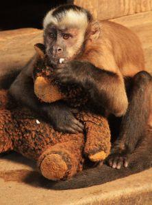 Peru pet monkey