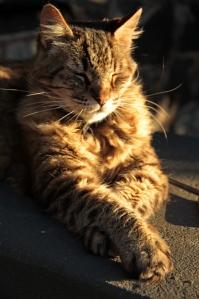 Miles looking feline