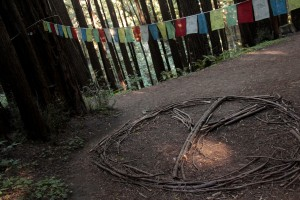 Prayer flags and peace signs? Redwoods have that effect on people. (Pic from a different forest.)