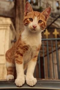 Jerusalem kitty05