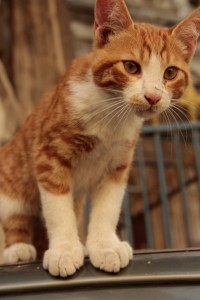 Jerusalem kitty06
