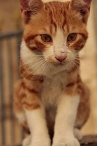 Jerusalem kitty08