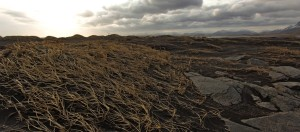 A windy afternoon in Iceland