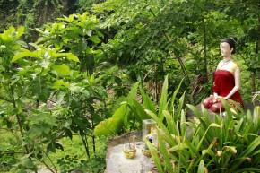 Ko Phi Phi jungle clearing