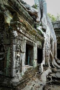 Angkor Wat banyan
