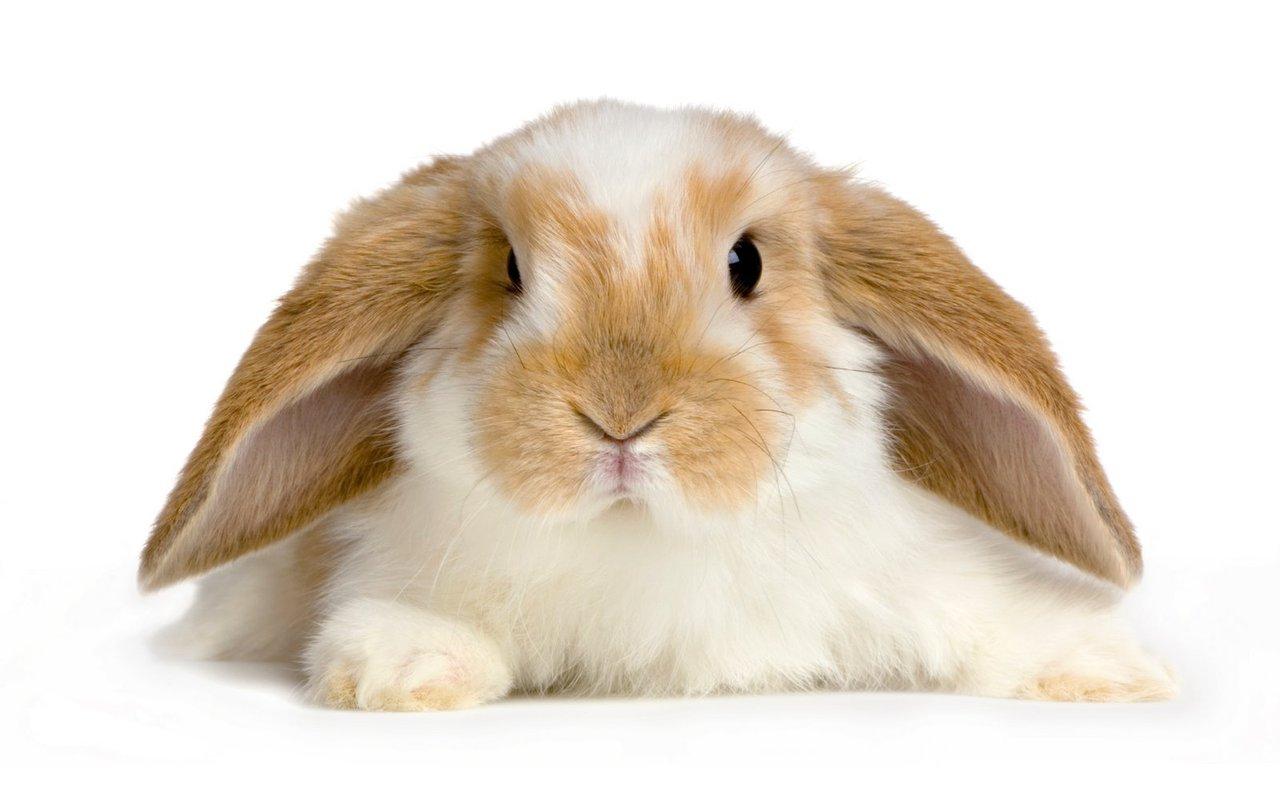 Cute Rabbits It's Feelgood...