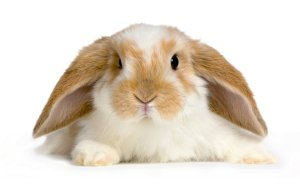 What, you think I'm above putting cute bunny photos on my blog?
