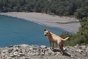 Lycian Way guide dog