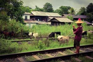 Goatherd Myanmar