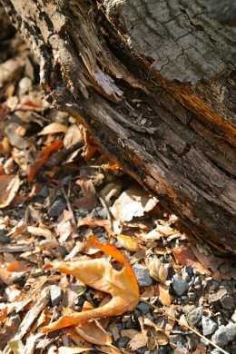 Log and leaf