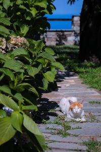 Ambush predator