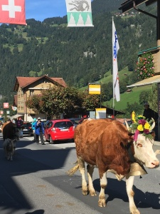 swiss-cow-procession