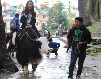 yak riding in Manali