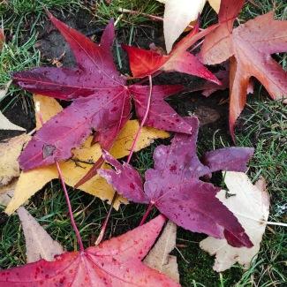 Portland leaf fall