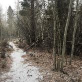 Mono Lake path