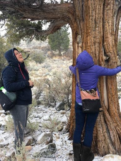 Mono Lake tree hugging