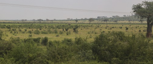 Terrible photo of an elephant from Kenya's SGR train