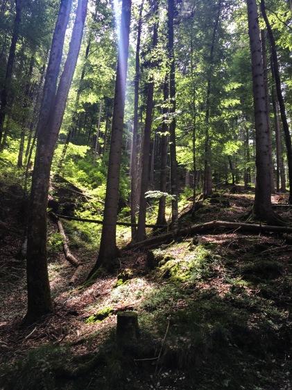 Alpsee woods light